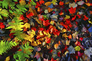 Falls Color Palette Print by Dan Friend