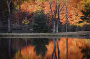 Fall's Natural Fire Print by Lynn Bauer
