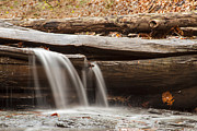 Environemtn Framed Prints - Falls through a Tree Framed Print by Darleen Stry