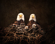 Bald Eagle Framed Prints - Family is Forever Framed Print by Jai Johnson