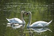 Amazing Jules - Family Love