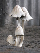 Franshisca Delgado - Family of Mushrooms