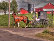 Amish Family Photos - Family Outing by David Bearden