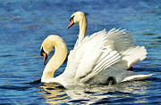 Swans... Prints - Family Ties  Print by Fraida Gutovich
