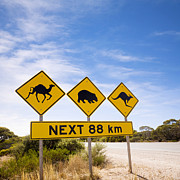 Outback Framed Prints - Famous Australian Sign Camels Wombats Kangaroos Framed Print by Colin and Linda McKie