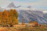 Foilage Prints - Famous Barn - Grand Tetons Print by Donna Kennedy