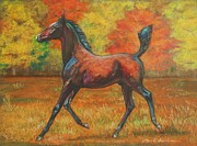 Horse Images Pastels Framed Prints - Fantail- arabian foal Framed Print by Dorota Zdunska