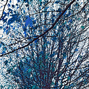 Blue Leaves Framed Prints - Fantastical Tree Framed Print by Bonnie Bruno