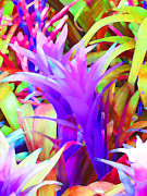 Margaret Saheed Posters - Fantasy Bromeliad Abstract Poster by Margaret Saheed