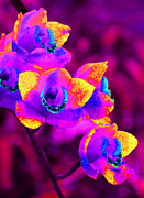 Orchids Art - Fantasy Orchids by Margaret Saheed