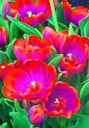 Saheed Posters - Fantasy Tulip Abstract Poster by Margaret Saheed