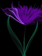 Bunch Digital Art - Fantasy Tulip  by Heidi Smith