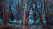Mystical Art - Fantasy woods Blue by Tammy Collins