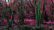 Daydream Prints - Fantasy Woods Fushia Print by Tammy Collins