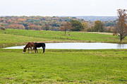 Grazing Horse Originals - Farm Animals by John Panella