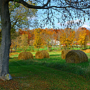 Bales Framed Prints - Farm - Autumn Harvest Framed Print by Paul Ward