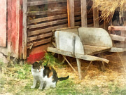 Designs By Susan Prints - Farm Cat Print by Susan Savad