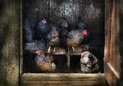 Rustic Metal Prints - Farm - Chicken - The Hen House Metal Print by Mike Savad