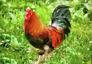 Painted Feathers Posters - Farm - Chicken - The Rooster Poster by Mike Savad