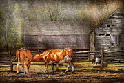 Old Barns Acrylic Prints - Farm - Cow - A couple of Cows Acrylic Print by Mike Savad