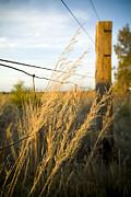 Tim Hester - Farm Fence
