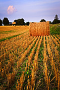 Farm Photo Prints - Farm field with hay bales at sunset in Ontario Print by Elena Elisseeva