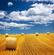 Growing Photo Posters - Farm field with hay bales Poster by Elena Elisseeva