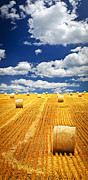 Land Photo Posters - Farm field with hay bales in Saskatchewan Poster by Elena Elisseeva