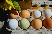 Sharon L Stacy - Farm Fresh Eggs