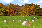 Bales Framed Prints - Farm Fresh Hay Framed Print by Robert Harmon