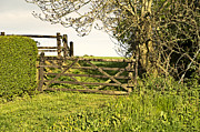 Niel Morley Framed Prints - Farm Gate Framed Print by Niel Morley