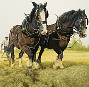 Plough Framed Prints - Farm Horses Framed Print by David Nockels