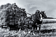 Greyhound Photos - FARM HORSES PULLING WHEAT LOAD TO THREASHER B and W by F Leblanc