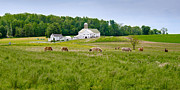 Amish Photographs Framed Prints - Farm Life Framed Print by Guy Whiteley