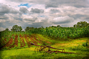 Farm - Organic Farming Print by Mike Savad