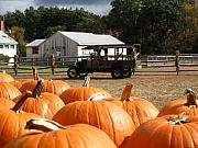 Concord Framed Prints - Farm Stand Pumpkins Framed Print by Barbara McDevitt