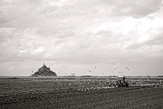 Flying Seagulls Framed Prints - Farm Work at Mont Saint Michel Framed Print by Olivier Le Queinec