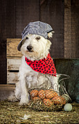 Dressed Photo Framed Prints - Farmer Dog Framed Print by Edward Fielding
