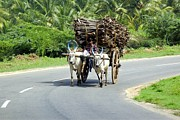 Pradeep Subramanian - Farmer With Bullock Cart...
