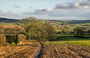 Pete Hemington - Farmland in Mid Devon
