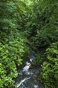 Svetlana Sewell - Fast River