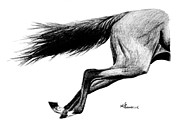 Bay Horse Drawings - Faster than the Speed of Camera by Kayleigh Semeniuk