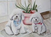 White Maltese Originals - Fat Bichons by Melinda Saminski