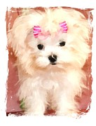 Maltese Puppy Framed Prints - Faux Maltese BELLA Framed Print by Margaret Newcomb