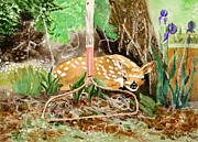 Rack Paintings - Fawn by Connie Mclaren