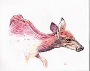 Fauna Drawings Originals - Fawn by Ramon  Castellanos
