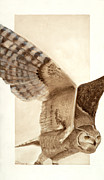 Great-horned Owls Paintings - Fearless Flyer by Joyce Blank