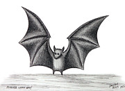 Bat Drawings - Fearless Little Bat by Daneen Rush