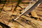 Coast Pyrography - Feather And Sand by Raimond Klavins