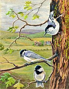 Chickadee Drawings Prints - Feathered Friends Print by Marilyn Smith